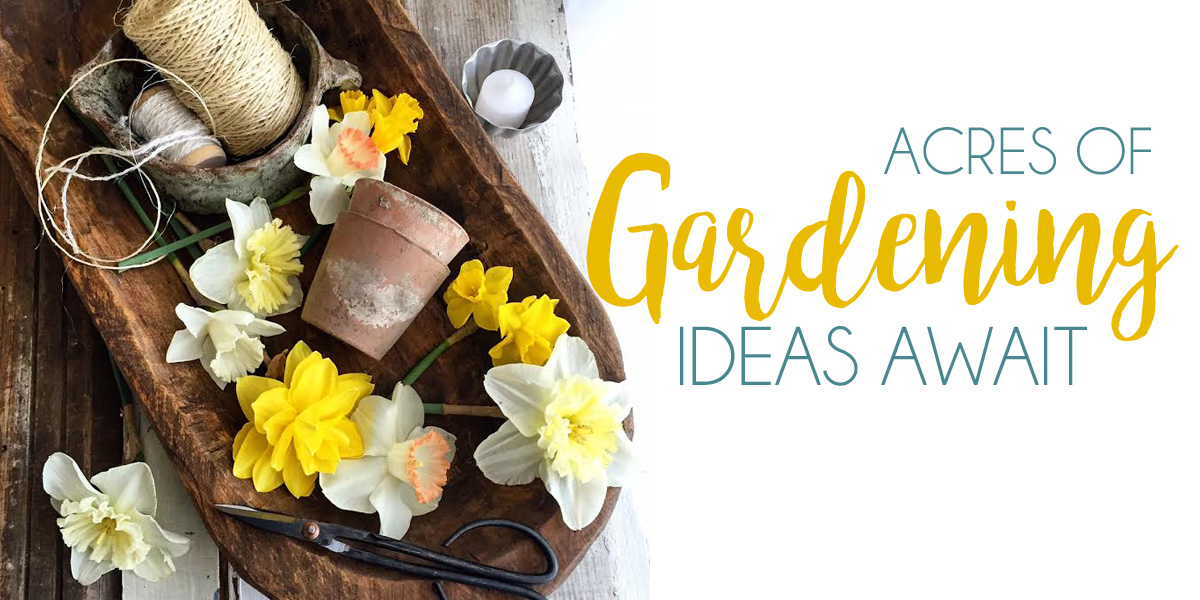 Gardening Ideas, Tips and Tricks